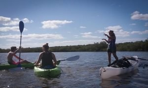 kayak eco tour lois reed